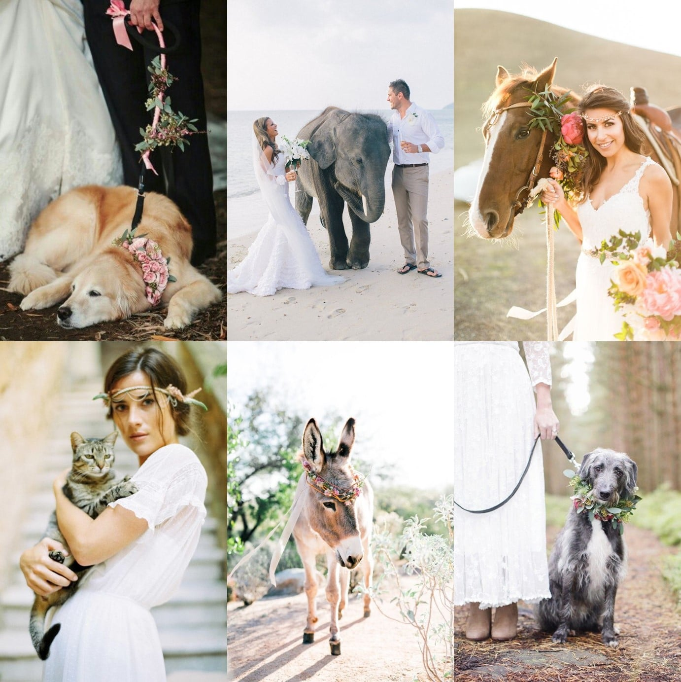 blog-animals